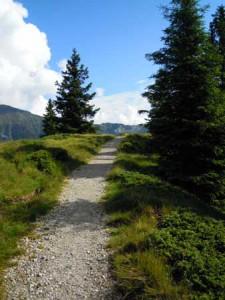 Wanderweg-in-Ratschings